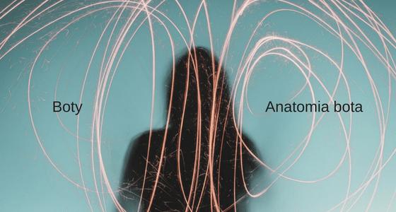 Anatomia bota
